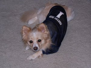 Yes, even our dog, Princess, has a jersey!