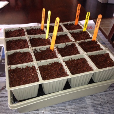Seeds planted in tray indoors